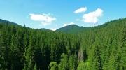 Proprietarii de pădure până în 30 ha, nu vor mai plăti paza către ocolul silvic!